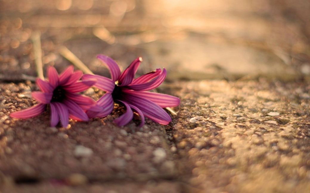 download-free-vintage-flowers-wallpaper-1920x1200-for-xiaomi-WTG3113149 (1)